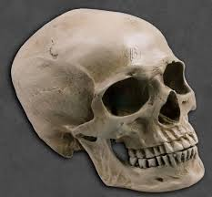 The Skull: The Meaning and the Implications